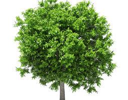 3D model Avocado Tree tree