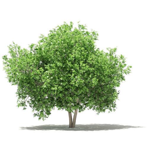 common fig tree 3d model max obj mtl fbx c4d mat uasset 1