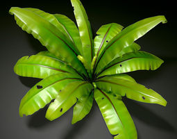 Bird nest fern 3D Model
