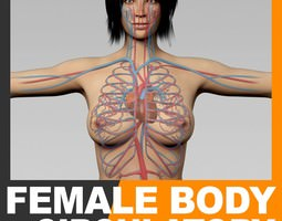 Human Female Body and Circulatory System - Anatomy 3D Model