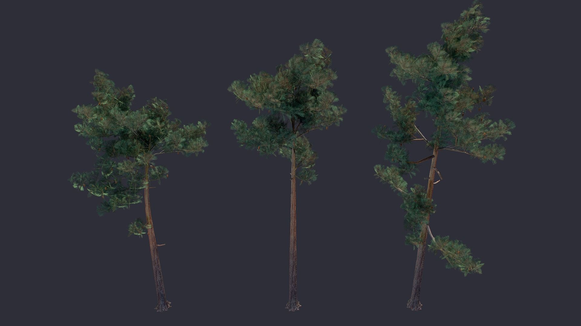 Pine LowPoly
