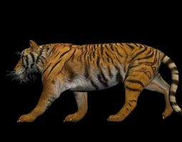 Photorealistic CGI Tiger Rigged 3D Model rigged game-ready