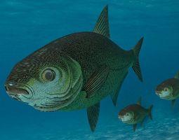 animated Sea Fish 3D Model