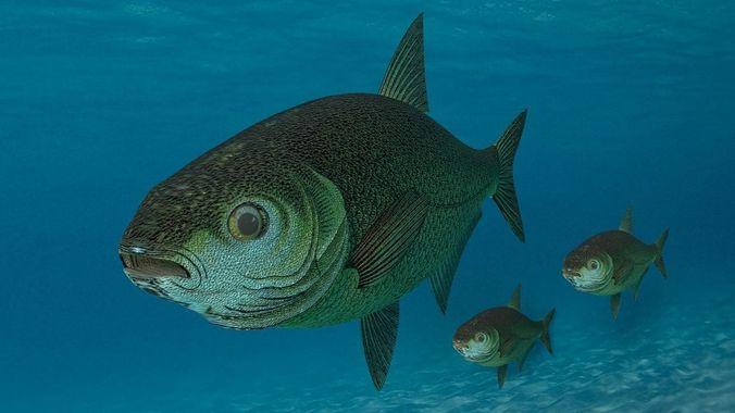 sea fish 3d model 3d model fbx blend 1