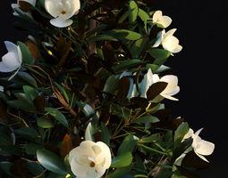 Magnolia Grandiflora 3D