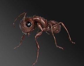 Carpenter Ant 3D model