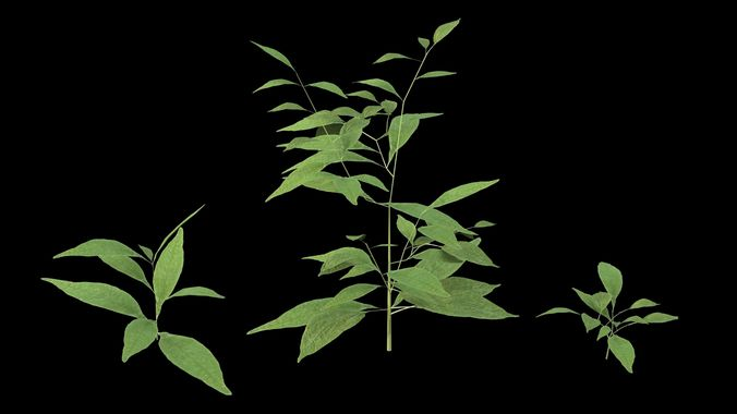 plants 3d model max obj mtl 3ds fbx 1