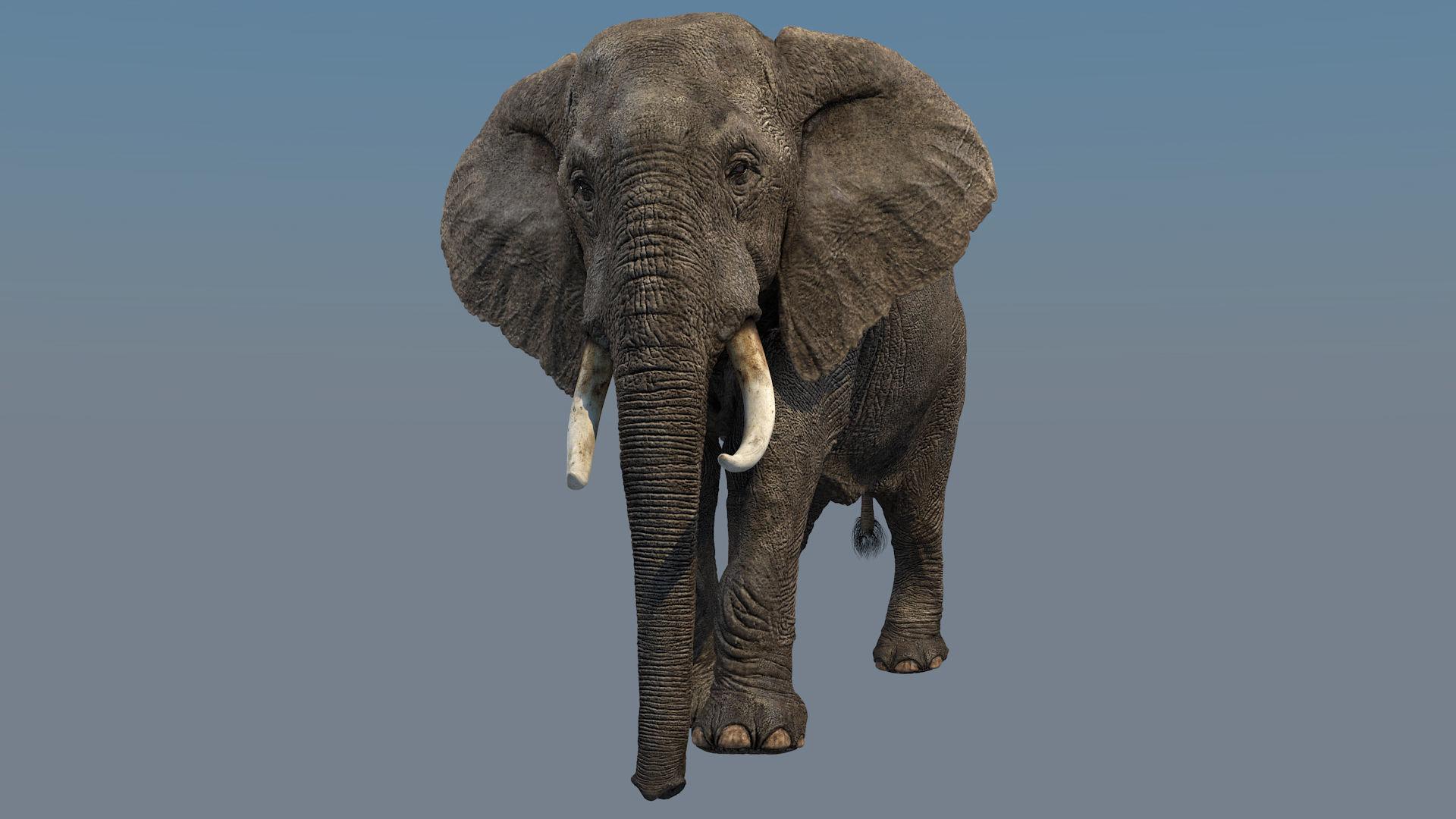 Elephant Animations