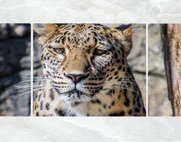 3D model Triptych Wall Art Leopard Portrait