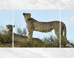 Triptych Wall Art Cheetahs 3D model