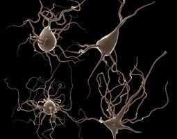 3D 4 Neurons package