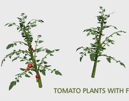 Tomato Plants With Fruit 3D model