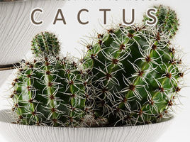 MODELING CACTUS IN SIMPLEST WAY